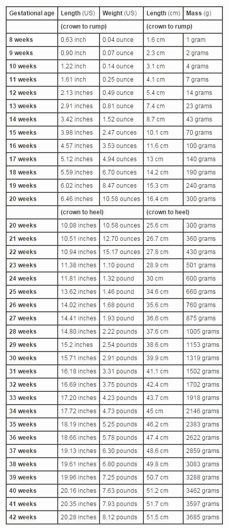 Average Baby Weight Chart Lovely Growth Chart Fetal Length and Weight Week by Week
