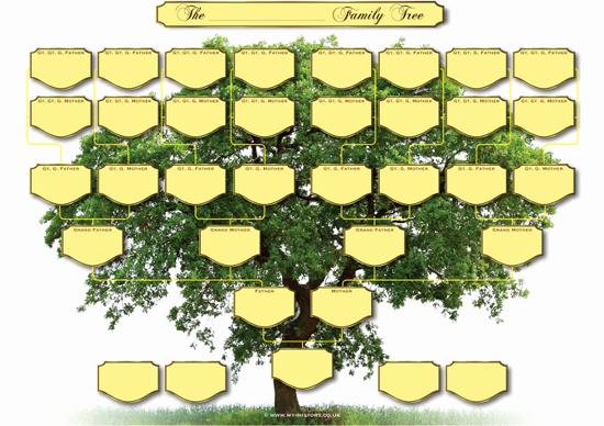 Blank Family Tree Template Beautiful A3 Blank Family Tree Charts