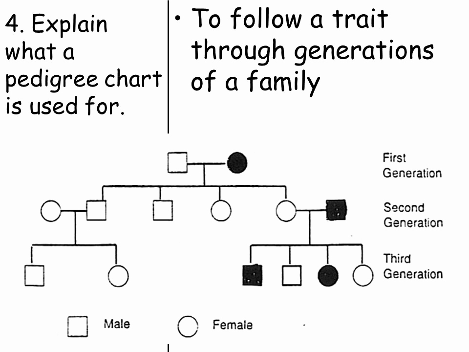 4 Generation Pedigree Chart Unique topic Genetics Aim How Do We Use Pedigree Charts to
