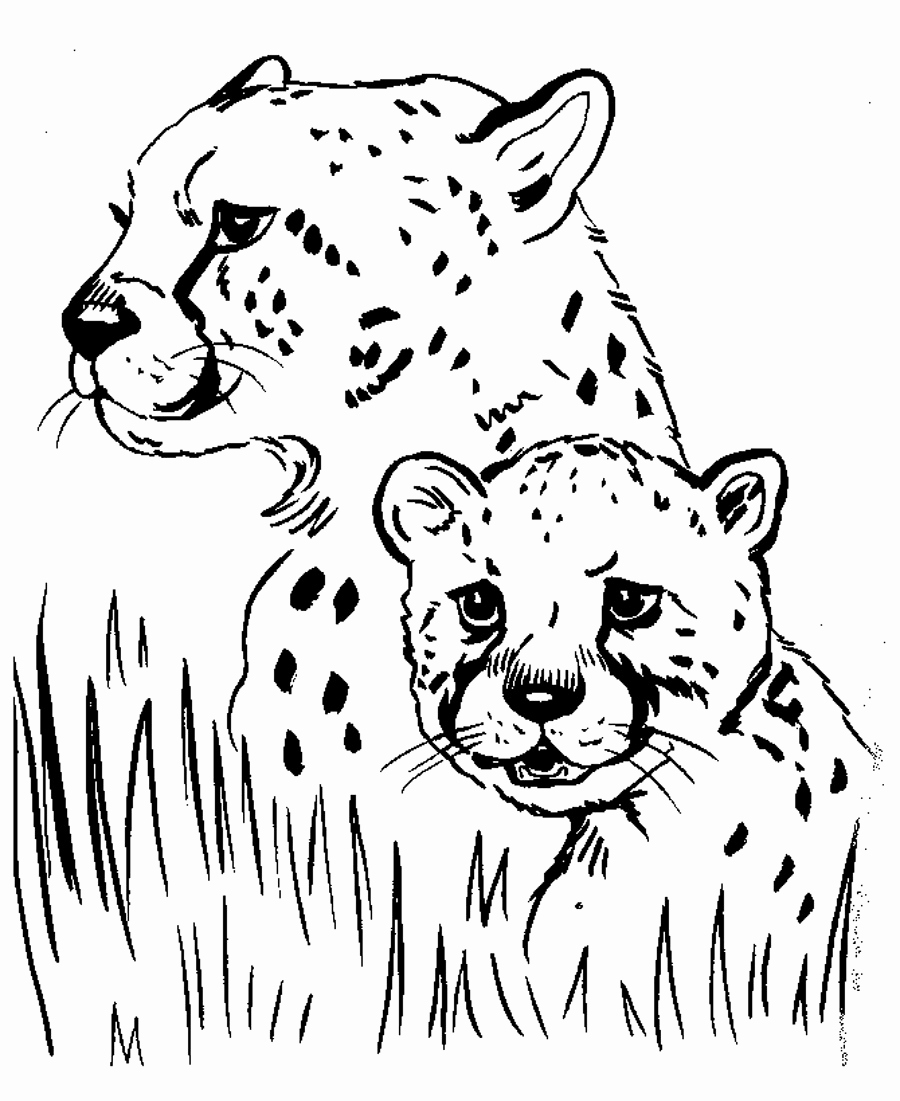 Animal Pictures to Color Beautiful Free Printable Cheetah Coloring Pages for Kids