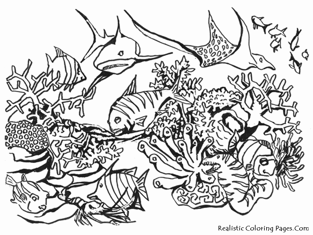 Animal Pictures to Color Elegant Realistic Animals Coloring Pages
