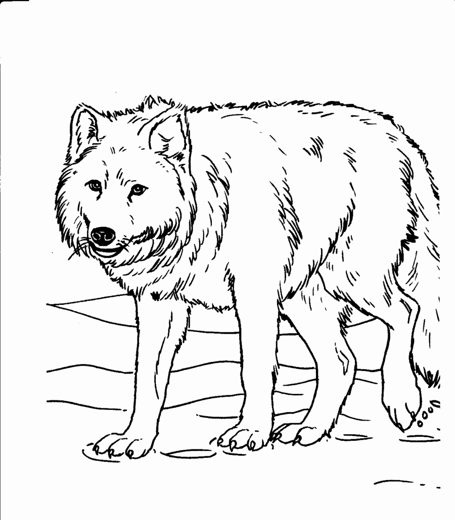 Animal Pictures to Color Luxury Animal Coloring Pages for Adults Bestofcoloring