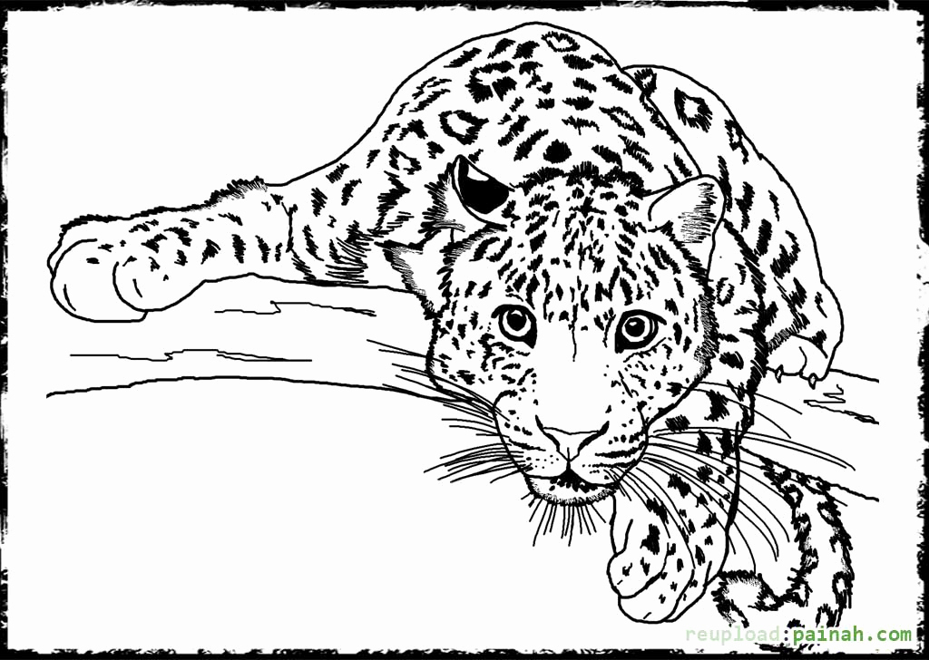 Animal Pictures to Color New Detailed Animal Coloring Pages Bestofcoloring