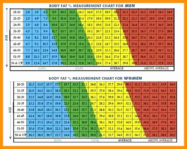 Army Height and Weight Chart Best Of Army Weight Chart – Army Height Weight Chart