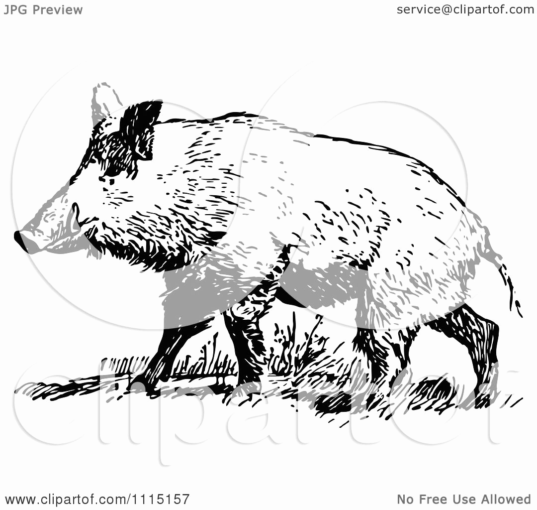 Black and White Illustration Inspirational Clipart Vintage Black and White Wild Hog Royalty Free