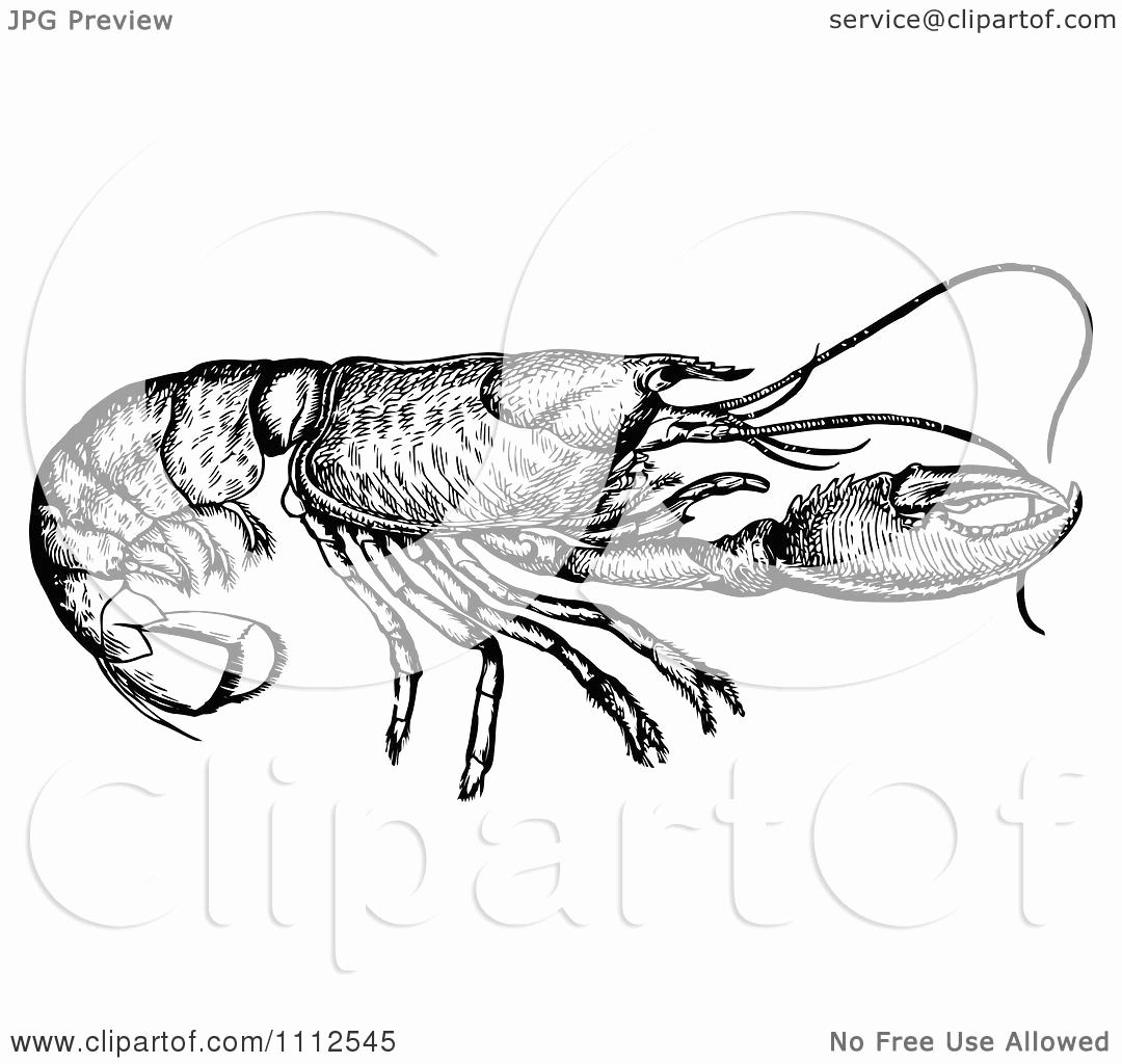 Black and White Illustration Lovely Clipart Vintage Black and White Lobster Royalty Free