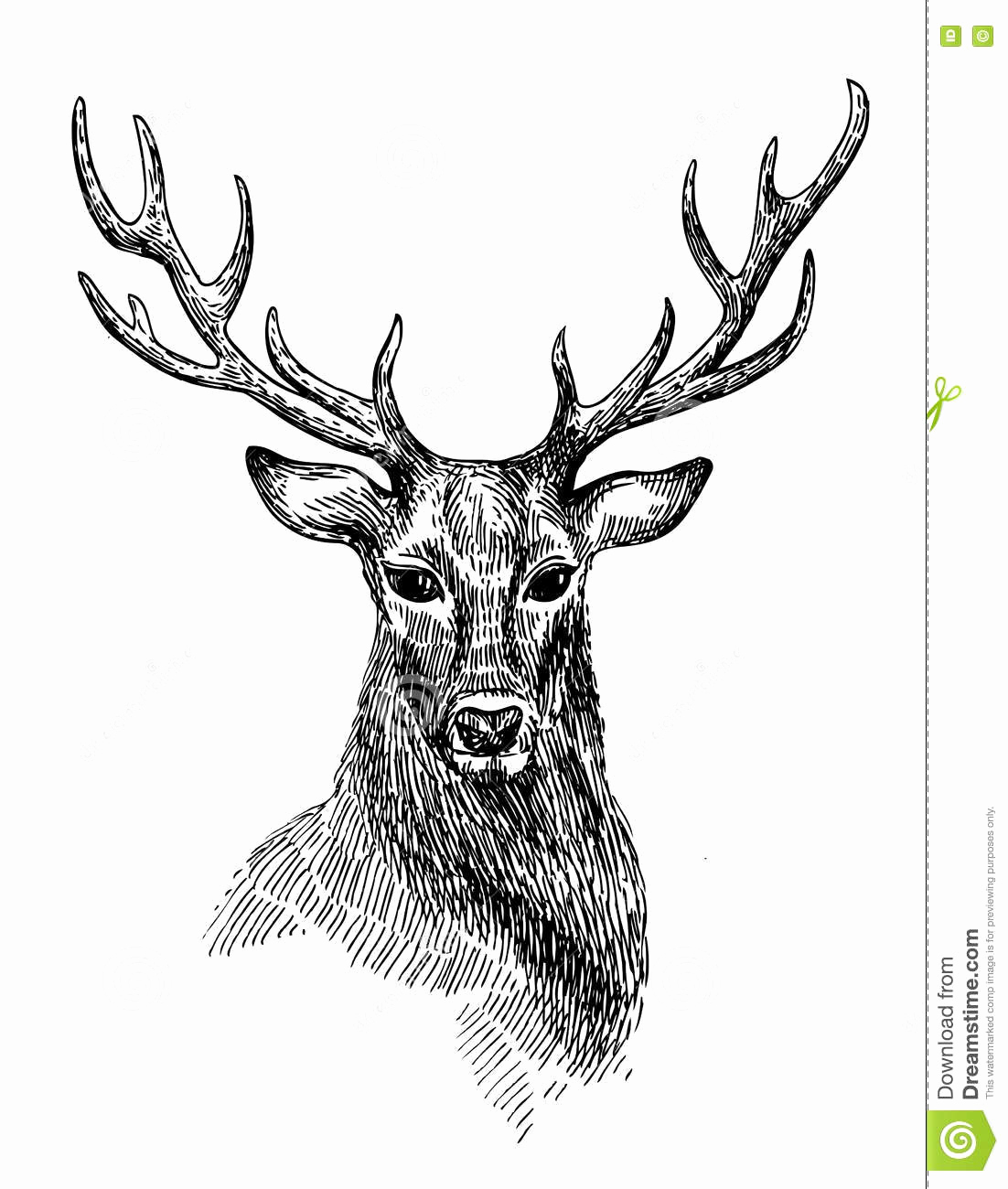 Black and White Illustration Luxury Sketch Of Deer Stock Image Image Of Wildlife Sketch