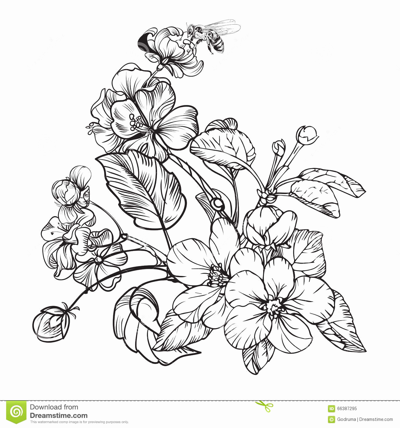 Black and White Illustrations Beautiful Vintage Elegant Flowers Black and White Vector