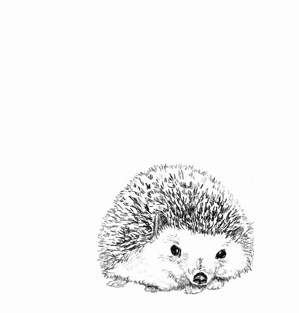 Black and White Illustrations Elegant Hedgehog Illustration Hedgie In Black and White Hedgehog