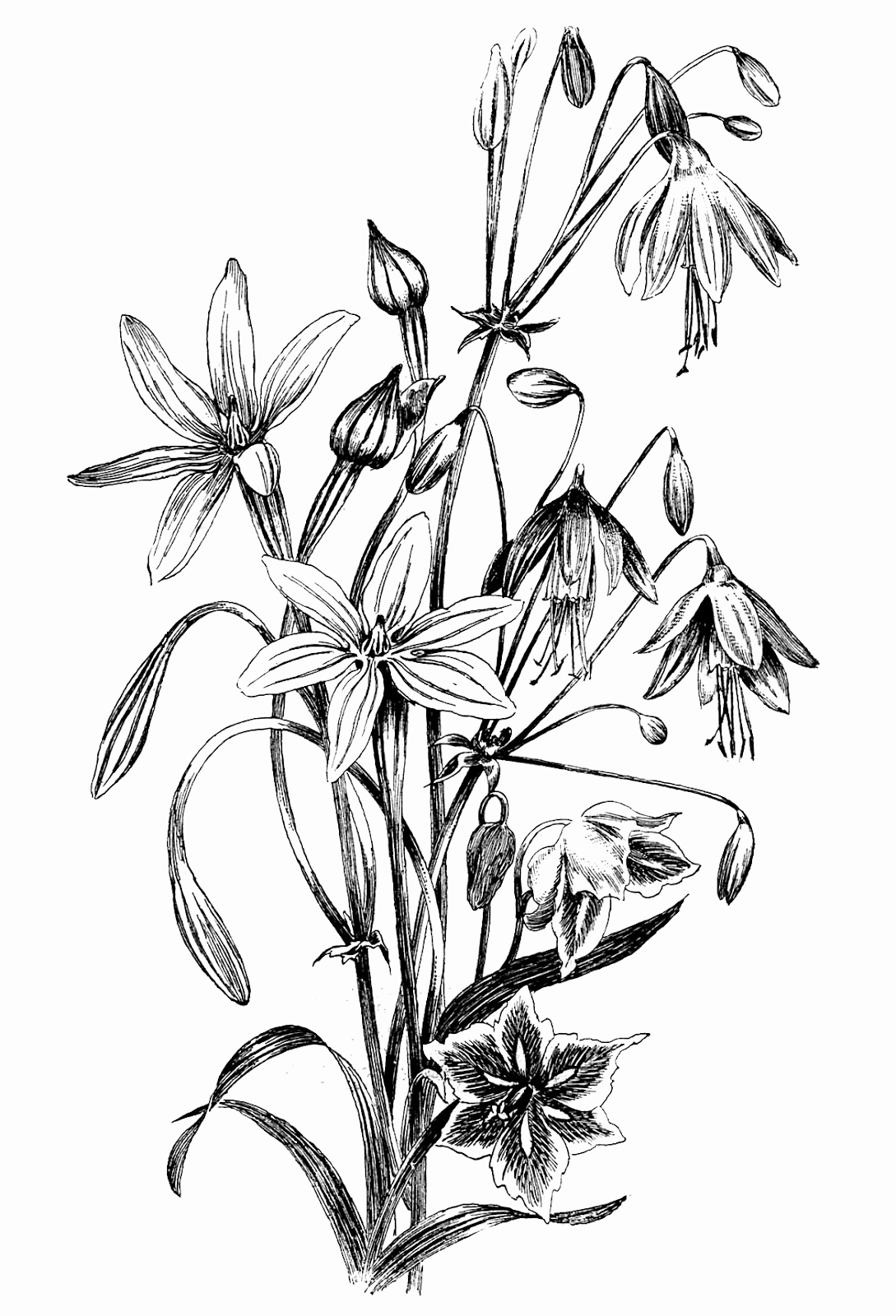 Black and White Illustrations Luxury Floral Graphics