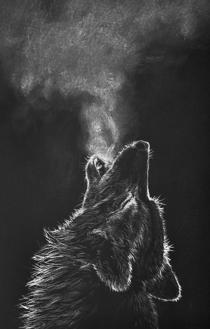 Black and White Illustrations Unique White Charcoal Drawing Black Paper Wolf Google Search