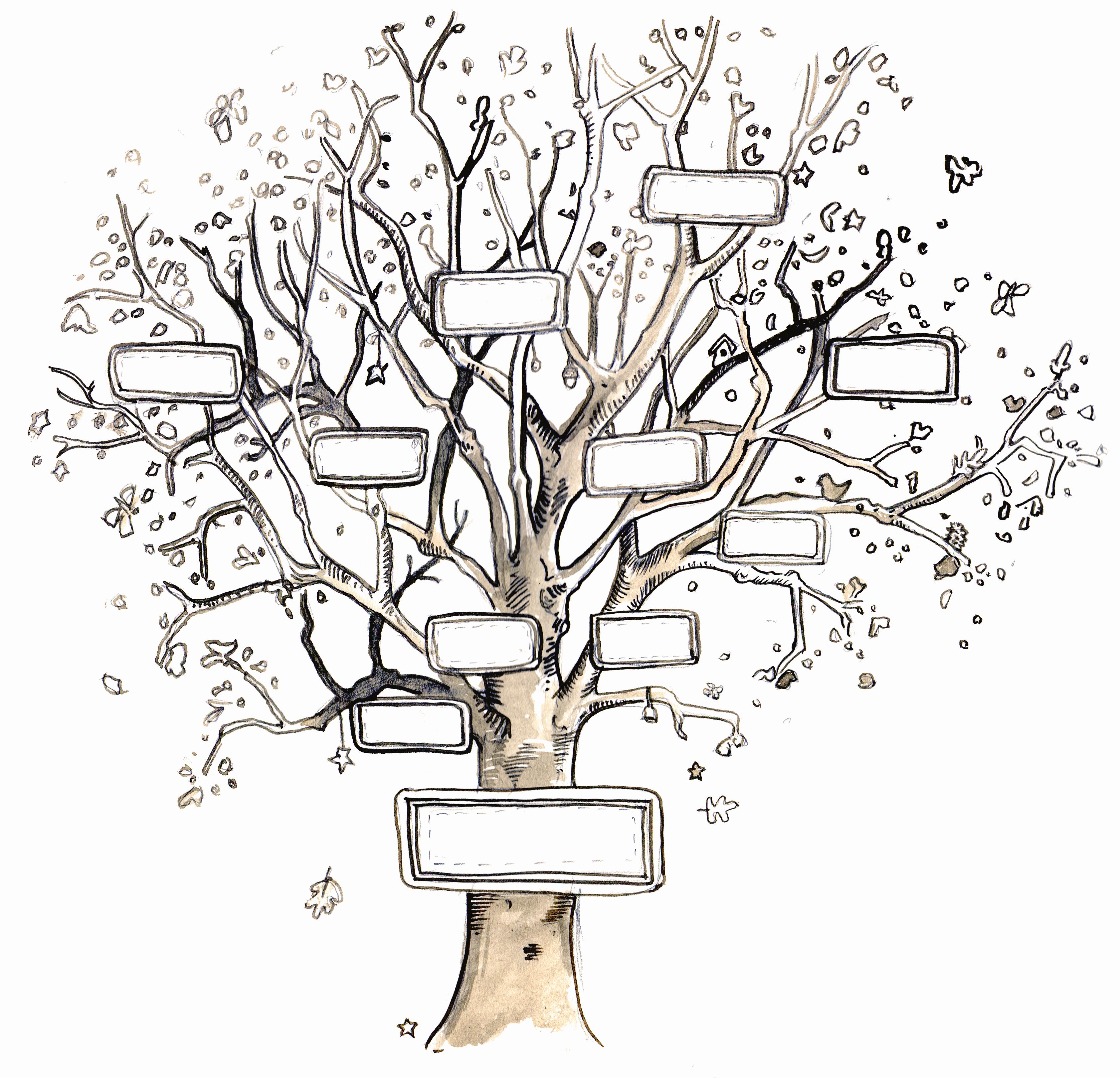 Blank Family Tree Chart Lovely Giants & Pilgrims