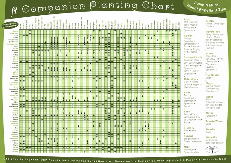 Companion Planting Chart for Vegetables Awesome 10 Best Raspberry Garden Ideas Images On Pinterest