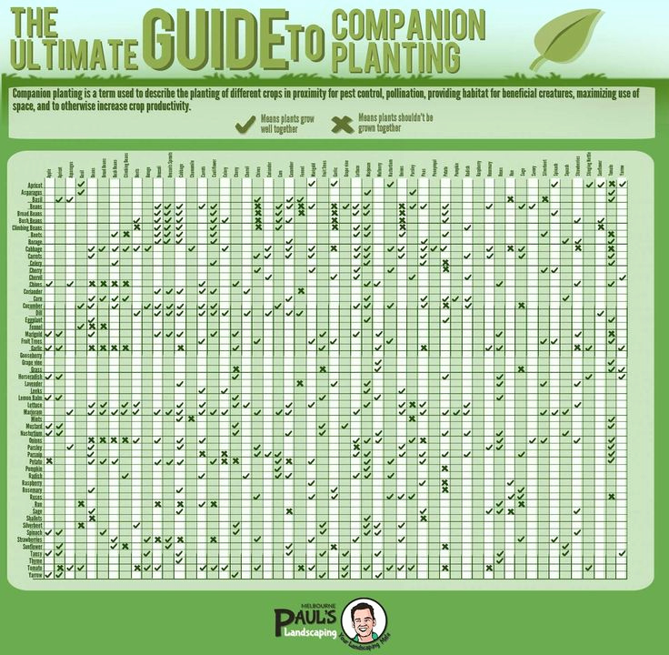 Companion Planting Chart for Vegetables Beautiful Best 25 Panion Planting Guide Ideas On Pinterest