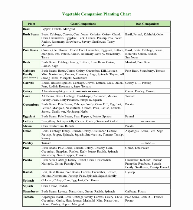 Companion Planting Chart for Vegetables Beautiful Panion Planting Chart Growin Crazy Acres