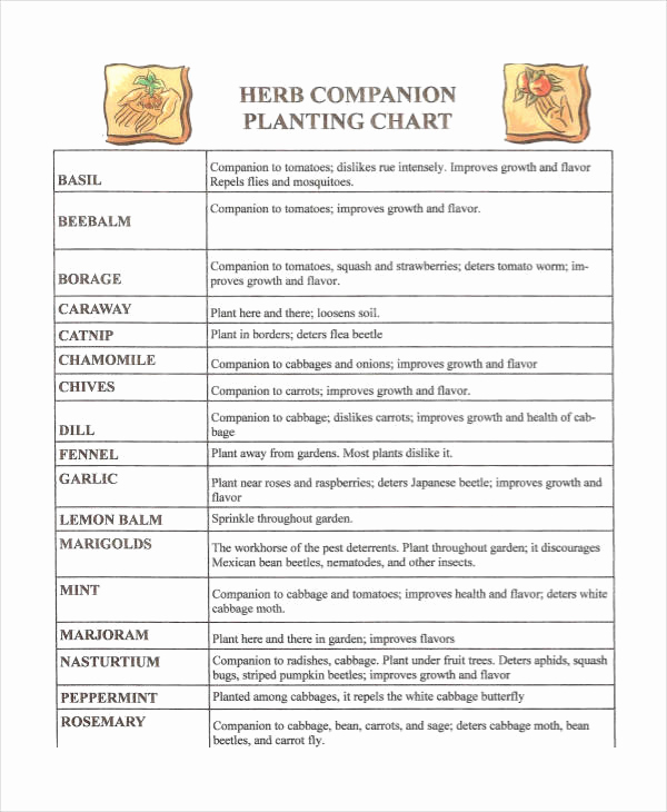 Companion Planting Chart for Vegetables Elegant Panion Planting Chart 9 Free Excel Pdf Documents