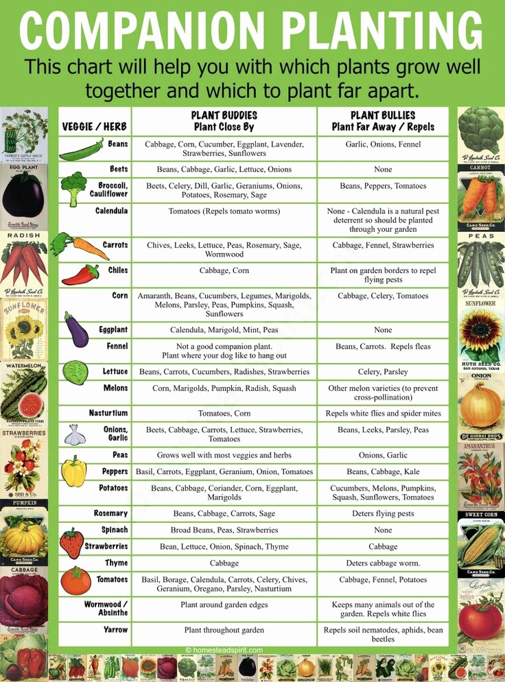 Companion Planting Chart for Vegetables Fresh 25 Best Ideas About Hydroponics On Pinterest