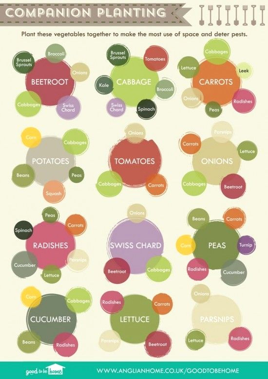 Companion Planting Chart for Vegetables Inspirational 25 Best Ideas About Panion Planting On Pinterest