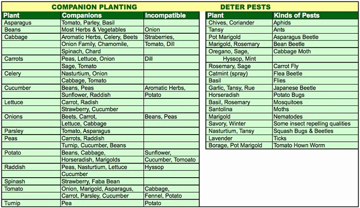 Companion Planting Chart for Vegetables Luxury 8 Best Garden Insects Images On Pinterest