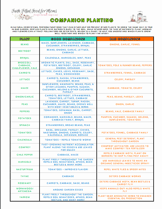 Companion Planting Chart for Vegetables New Beginners Panion Planting Resources for Gardening
