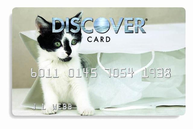 Discover Credit Card Designs Elegant Cat Design Credit Card Skeeter