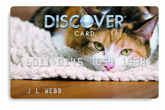 Discover Credit Card Designs New Cat Design Credit Card Cali