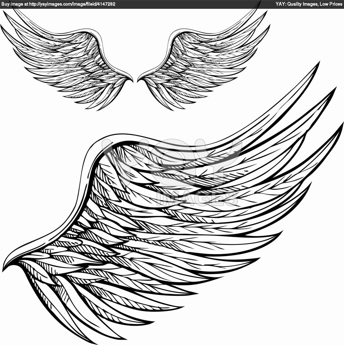Drawings Of Angels Wings Best Of Wings Sketches