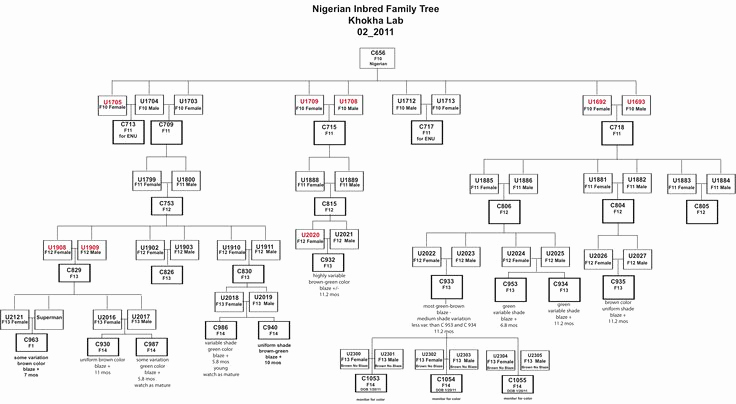 Family Tree Template Google Docs Inspirational Genetic Family Tree Template Google Search