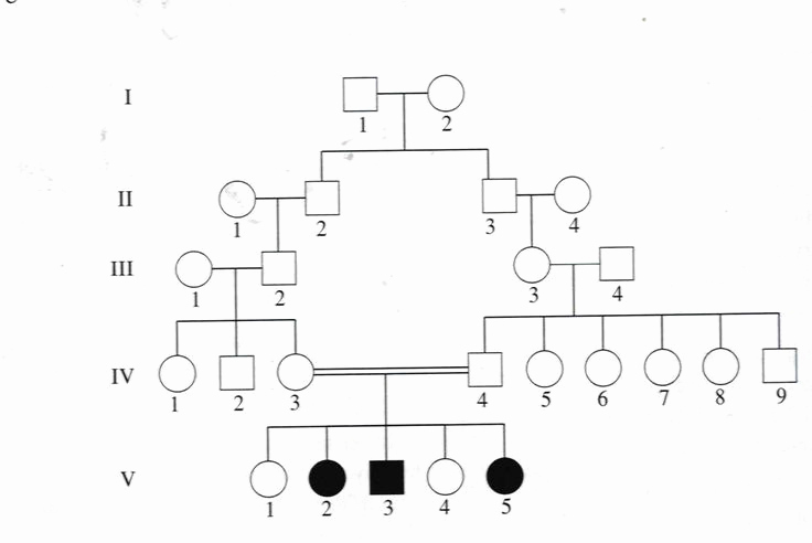 Family Tree Template Google Docs Lovely Genetic Family Tree Template Google Search