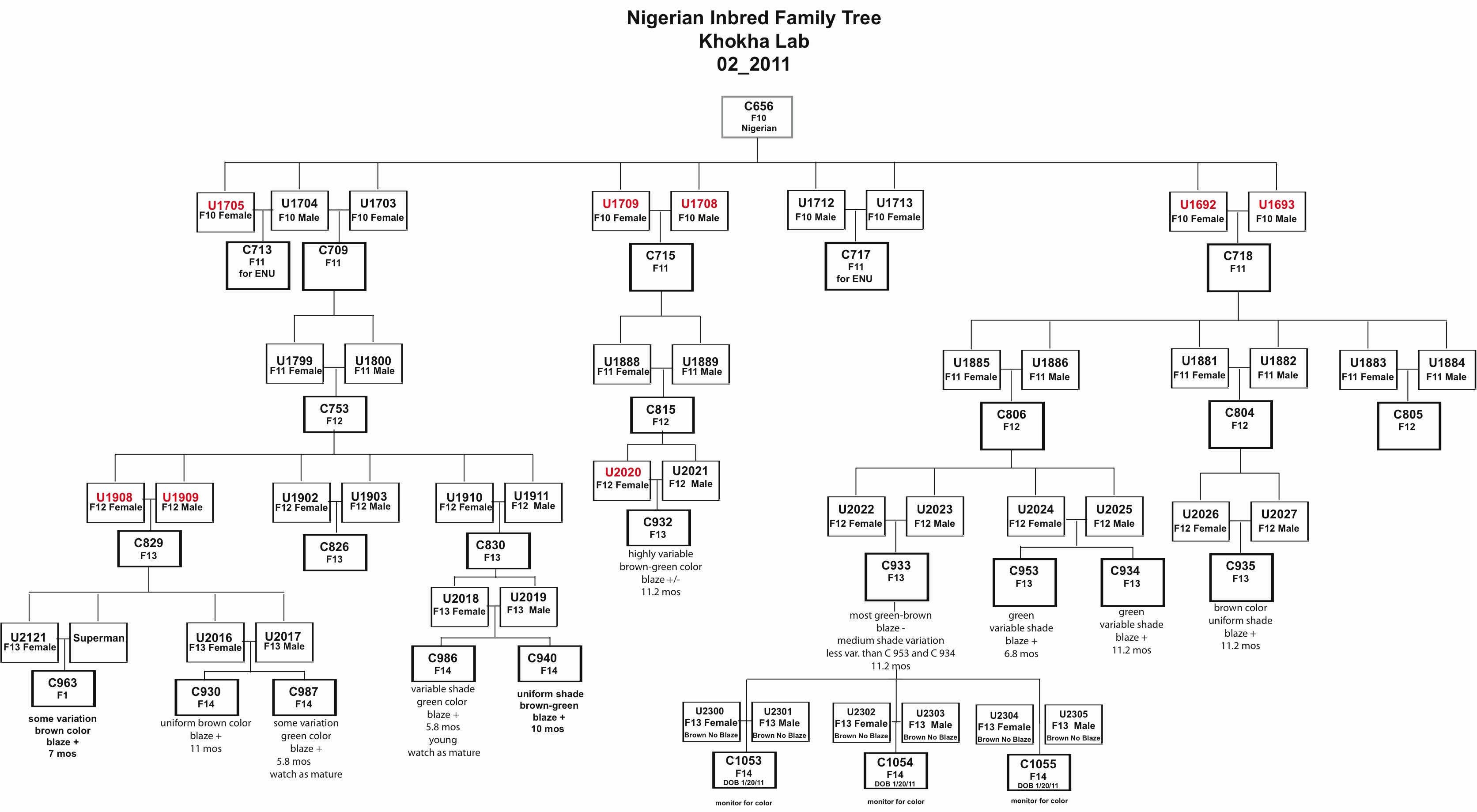 Family Tree Template Google Docs New Genetic Family Tree Template Google Search