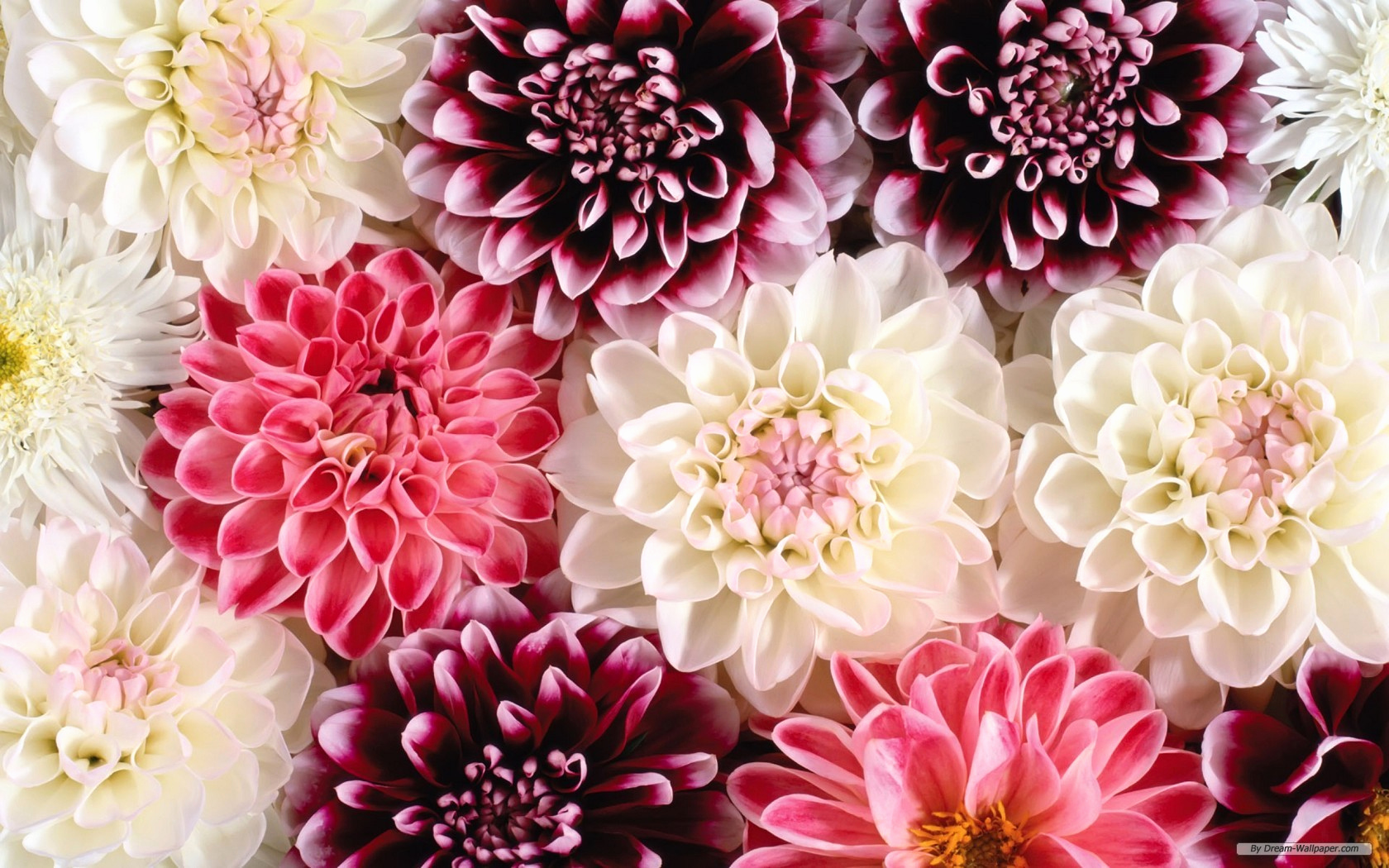 Free Flower Wall Paper Awesome Flower Wallpaper for Desktop – Weneedfun