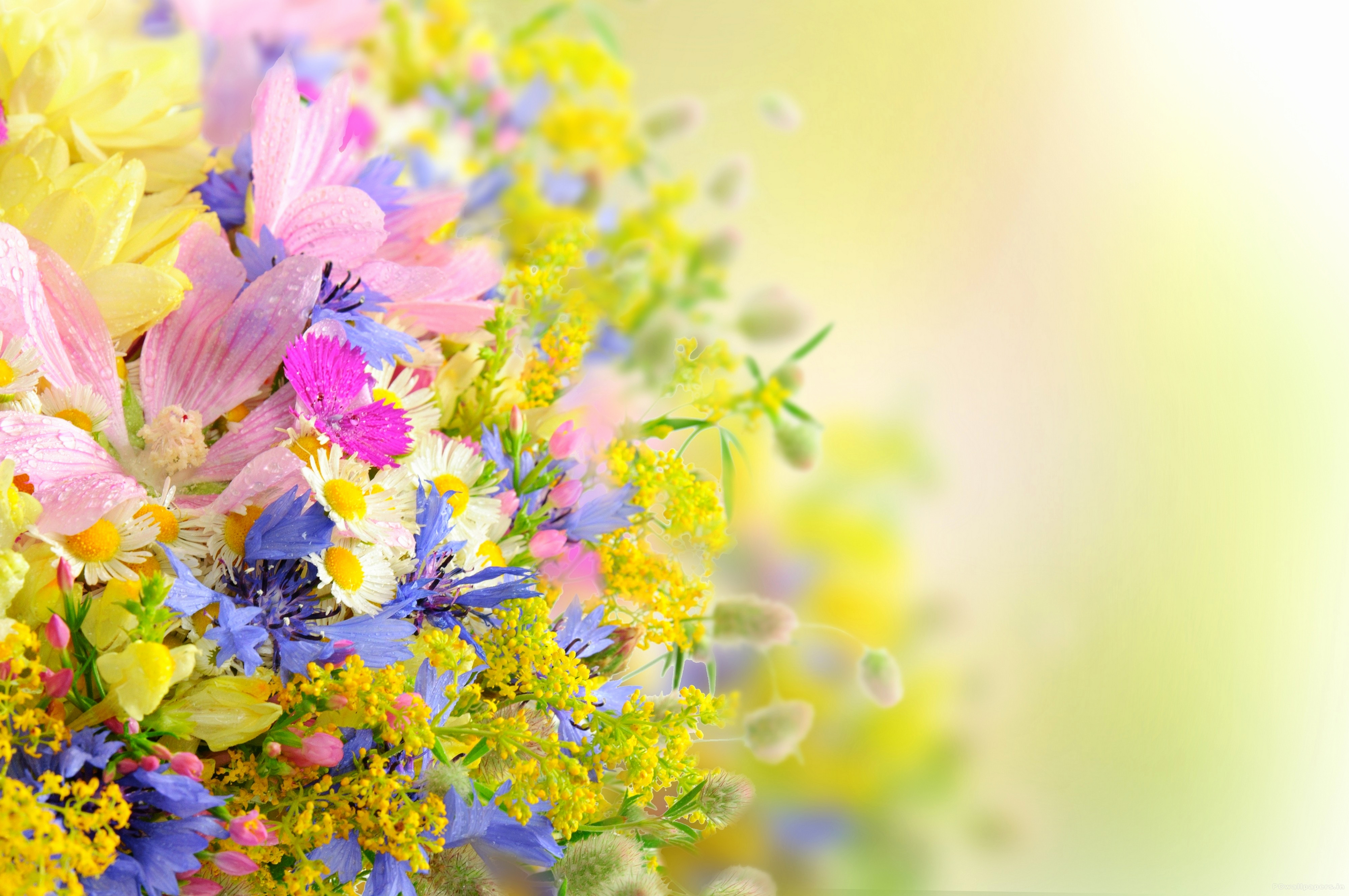 Free Flower Wall Paper Fresh Flower Wallpaper High Resolution