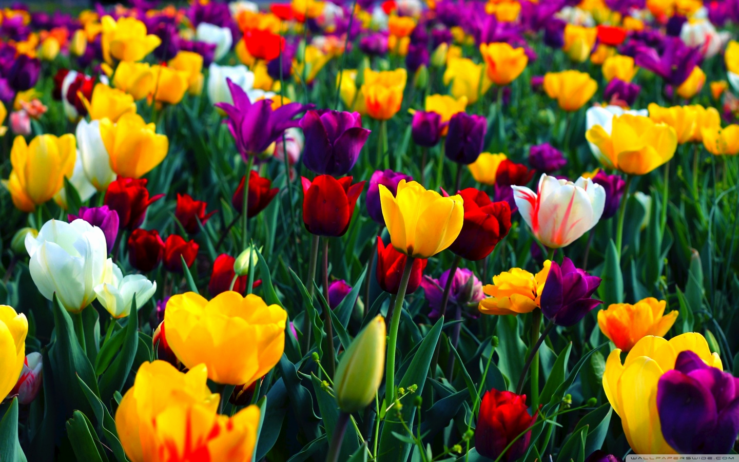 Free Flower Wall Paper Lovely Spring Wallpapers Hd Free