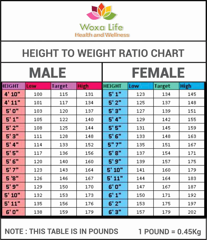 Height to Weight Ration Chart Elegant Height to Weight Ratio Chart by atuls218 On Deviantart