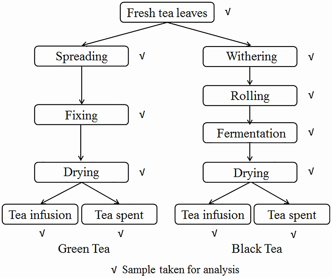 Manufacturing Process Flow Chart Best Of Tea Processing Flow Chart – Mulberry Tea Processing Flow