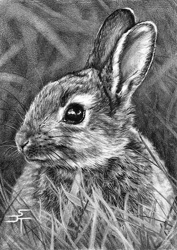 Photos to Pencil Sketches Elegant Drawn Rabbit Baby Animal Pencil and In Color Drawn