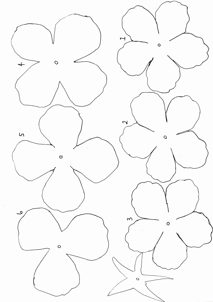 blank flower template