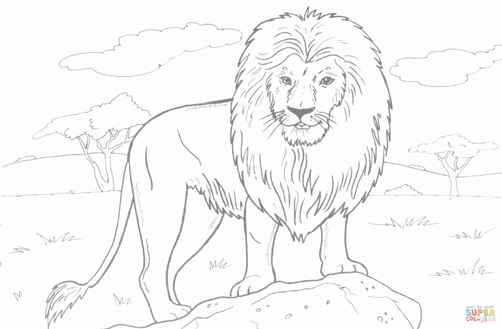 Printable Pictures Of Animals Best Of African Lion Coloring Page