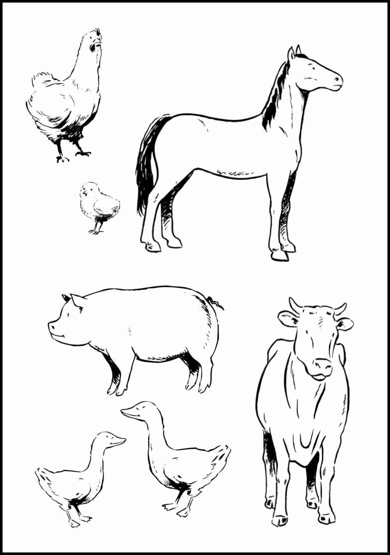 Printable Pictures Of Animals Best Of Baby Farm Animal Coloring Pages