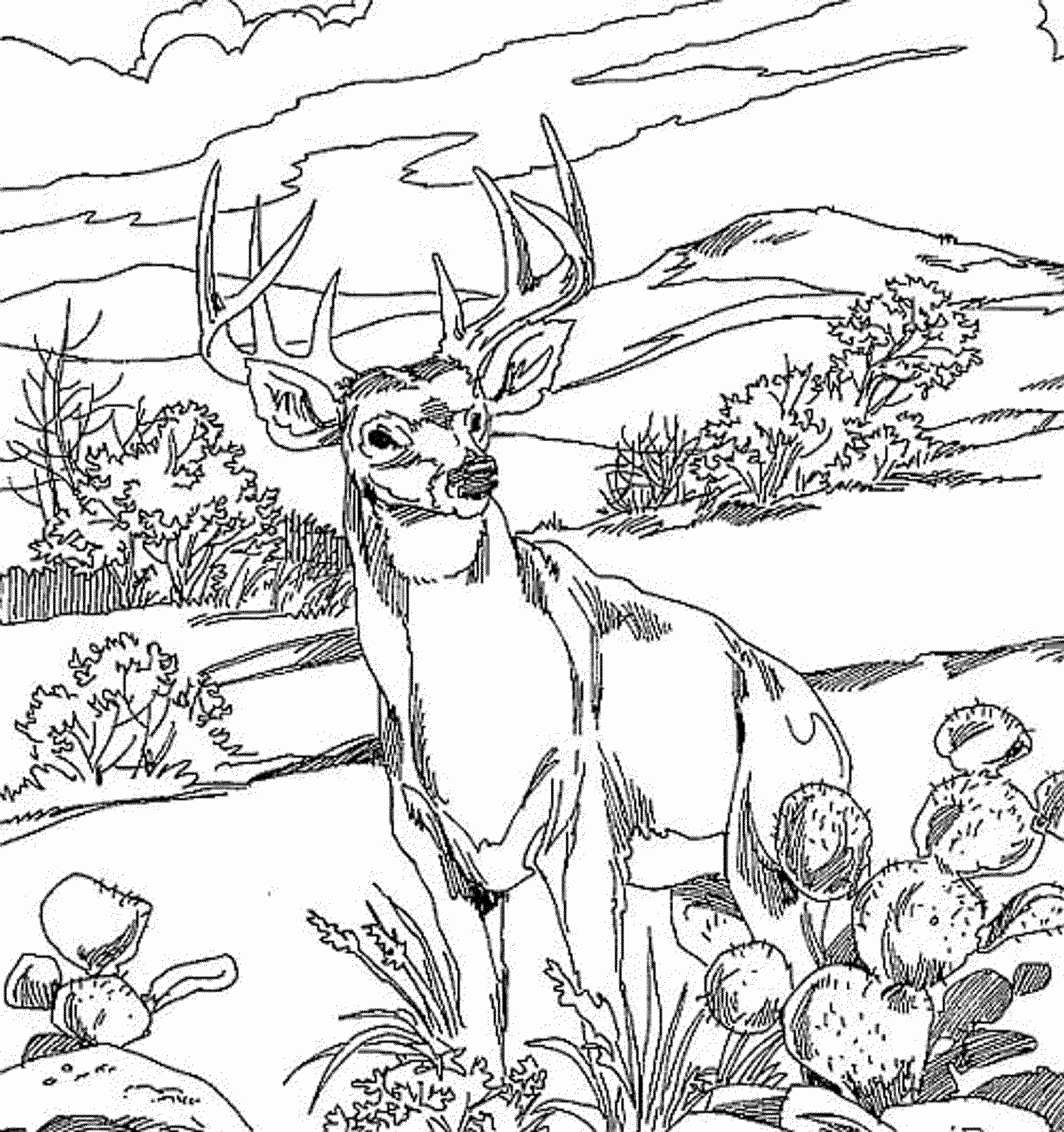 Printable Pictures Of Animals Elegant Animal Coloring Pages for Adults Bestofcoloring