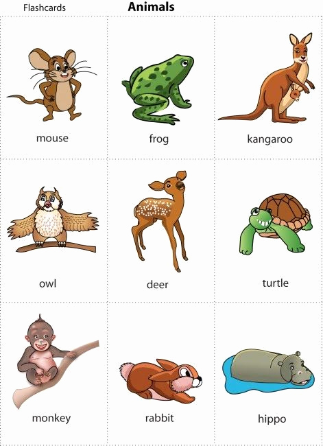 Printable Pictures Of Animals Fresh Animals Picture for Kids for Print