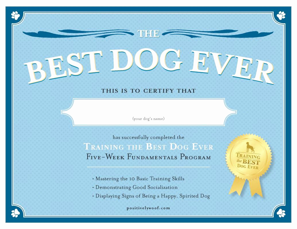 Service Dog Certificate Template Awesome Service Dog Certificate Template