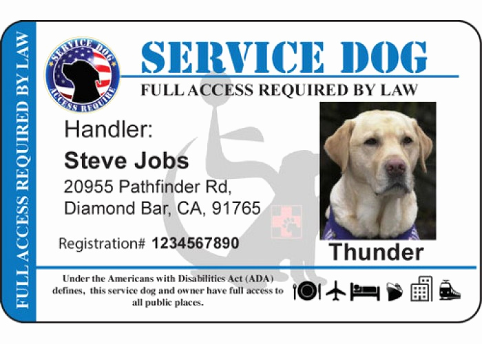 Service Dog Certificate Template Beautiful Personalize Service Horizontal Handicap Background Dog Id