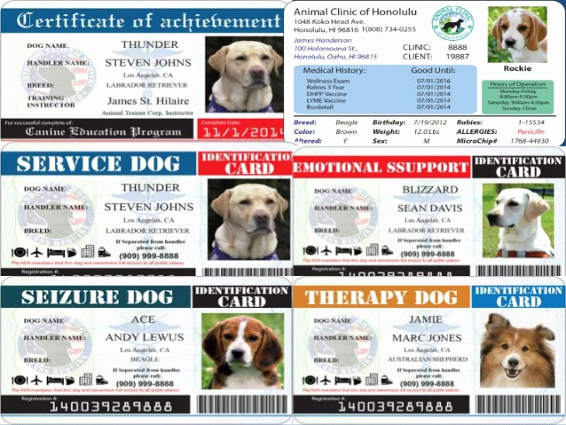 Service Dog Certificate Template New What is Service Dog Id and why You Need Service Dog Id