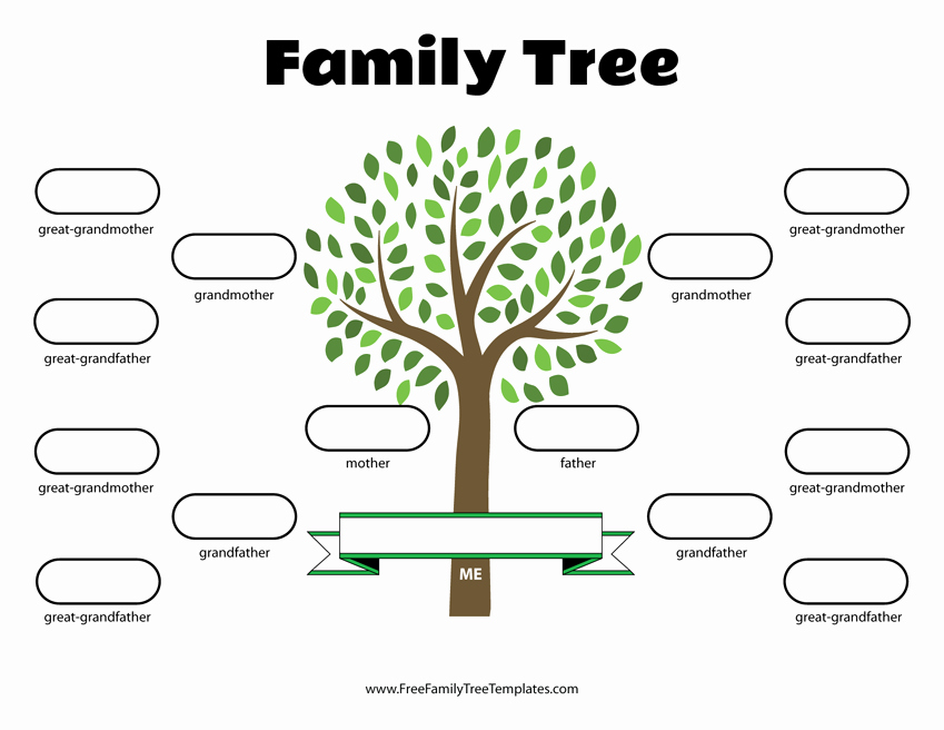 Template for Family Tree Beautiful 4 Generation Family Tree Template – Free Family Tree Templates
