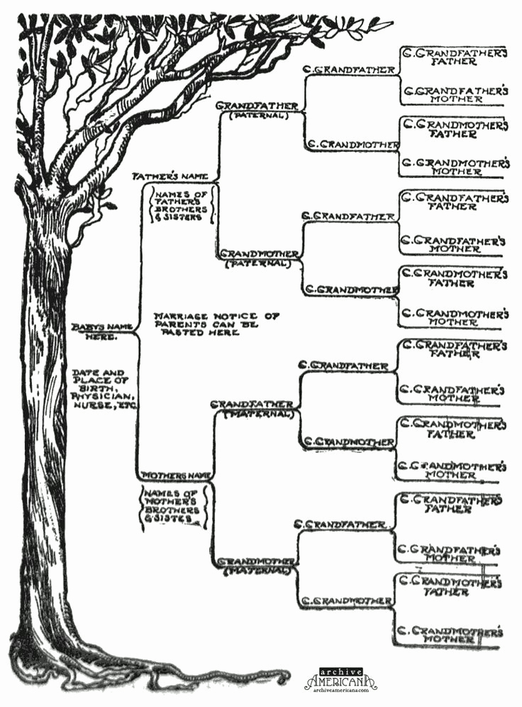 Template for Family Tree Unique Family Tree Template Word